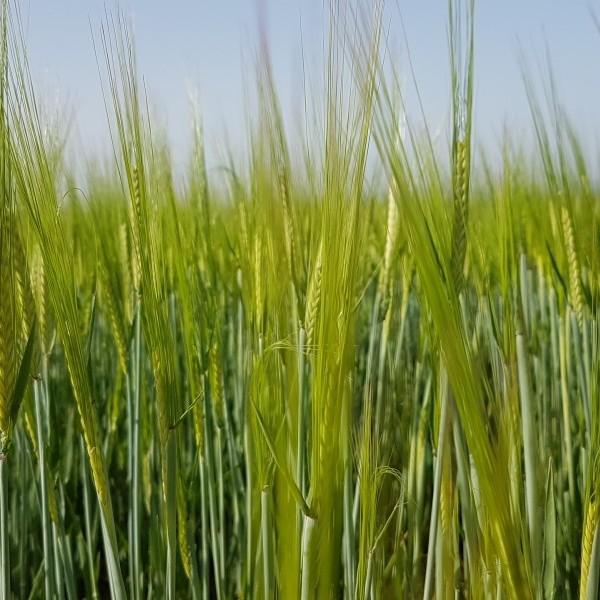 Los colectivos agrarios echan en falta ayudas para la modernización